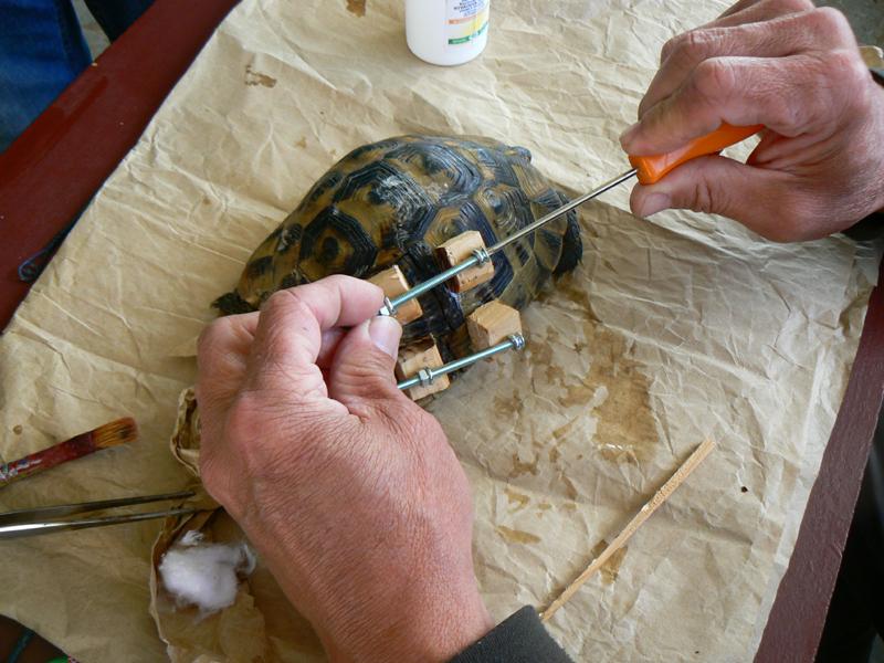 Лекуване на костенурка