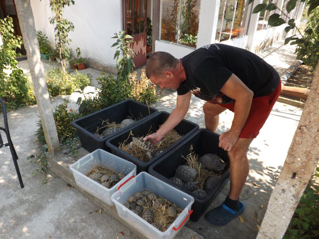 Подготовка за освобождаване на костенурки